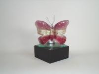 Vlinder-urn in glas-natuursteen