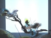vlinders-glas