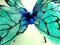 bijzondere as herinnering vlinder urn